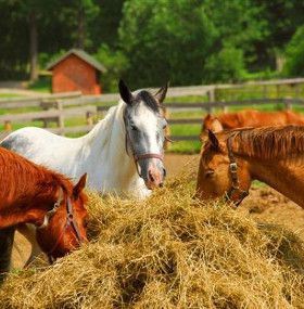 Cómo cuidar un caballo - Alimentación