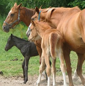 Cómo cuidar un caballo - Comportamiento