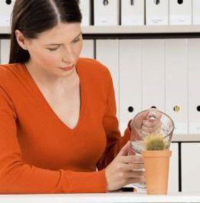 Cómo cuidar un cactus - Agua