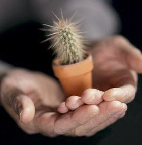 Cómo cuidar un cactus - Maceta