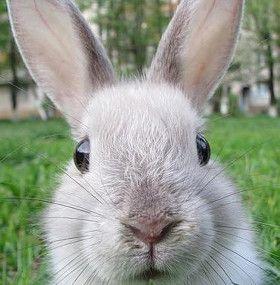 ¿Cómo cuidar un conejo doméstico?