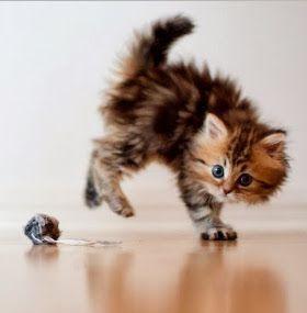 Cómo cuidar un gato - Juguetes