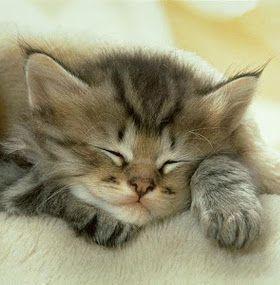 ¿Cómo cuidar un gato?