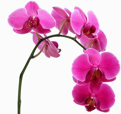 Cómo cuidar una orquídea - Flores