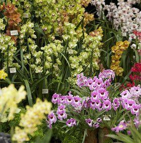 Cómo cuidar una orquídea - Tipos