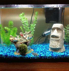 Cómo cuidar peces - Acuario