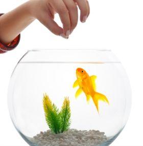 Cómo cuidar peces - Alimentación