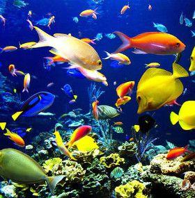 Cómo cuidar peces - Tipos