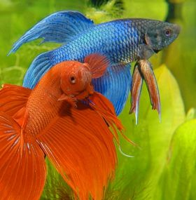 ¿Cómo cuidar peces?