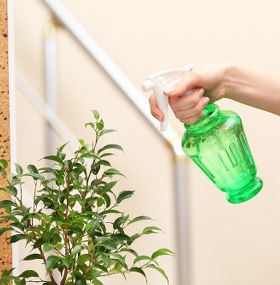 Cómo cuidar plantas de interior - Humedad