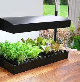 C mo cuidar plantas de interior - Luces para plantas de interior ...