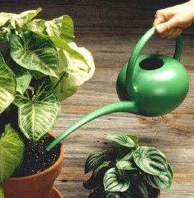 Cómo cuidar plantas de interior - Riego