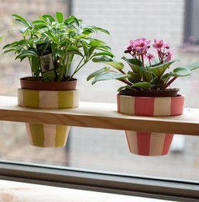 Cómo cuidar plantas de interior - Ubicación