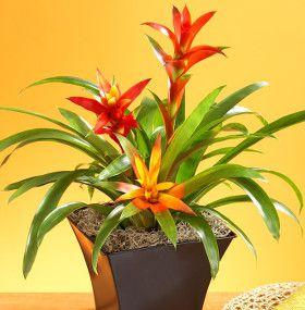 C mo cuidar plantas de interior - Plantas de interior tipos ...