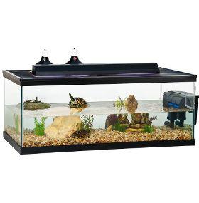 Cómo cuidar tortugas de agua - Acuario