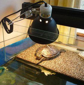 Cómo cuidar tortugas de agua - Iluminación